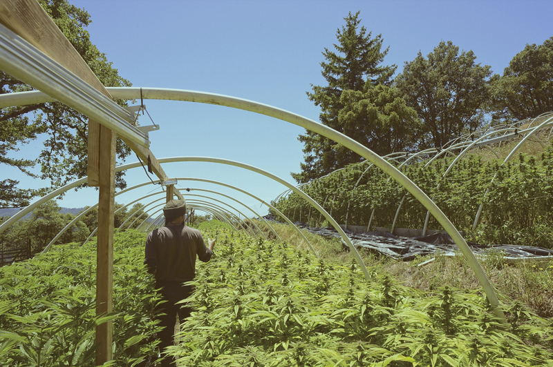FLOWER CO. Humboldt County Weed Farm